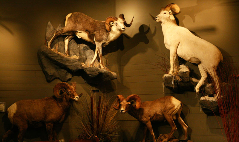 North American Display
